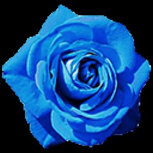 Синие Розы (0)