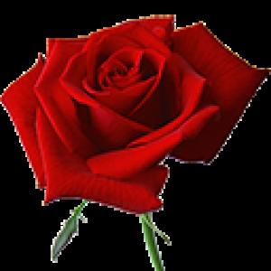 Красные Розы (0)