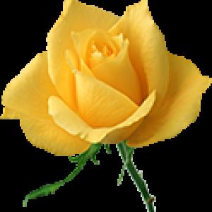Желтые Розы (0)